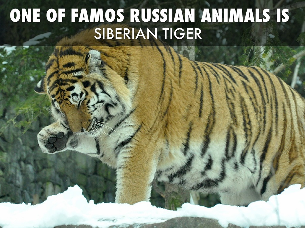Distribution of Plants & Animals in Russia & Central Asia ... |Native Animals From Russia