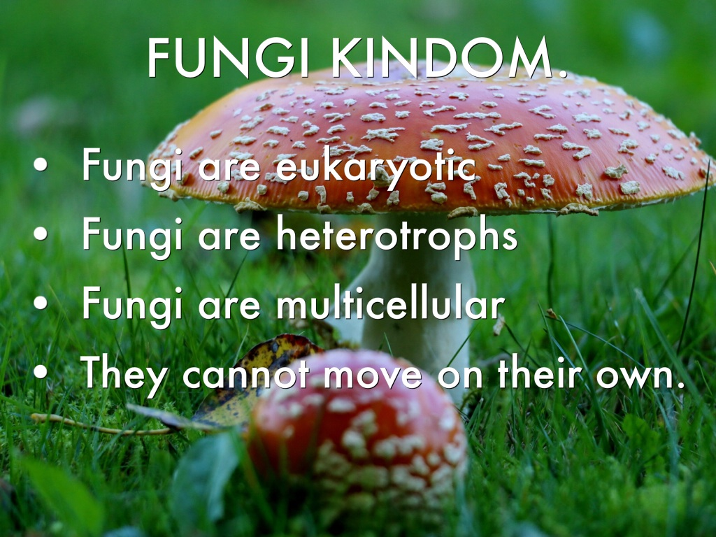Protista And Fungi By Anabeth Whatley