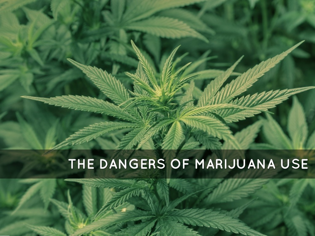 the dangers of marijuana essay Get the facts about how marijuana affects your brain and body.