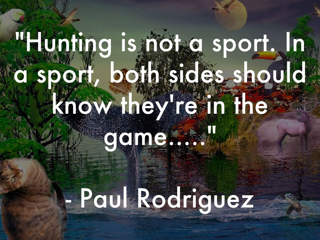 why hunting should not be a sport Recent media coverage of trophy hunting - following the death of the lion cecil - raises questions about why some people seem to enjoy killing animals for fun.