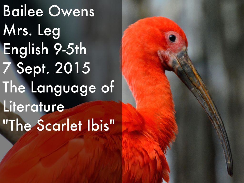 the scarlet ibis full text The scarlet ibis annotations (8 pages) c l i c k t o e n l a r g e powered by create your own unique website with customizable templates get started.