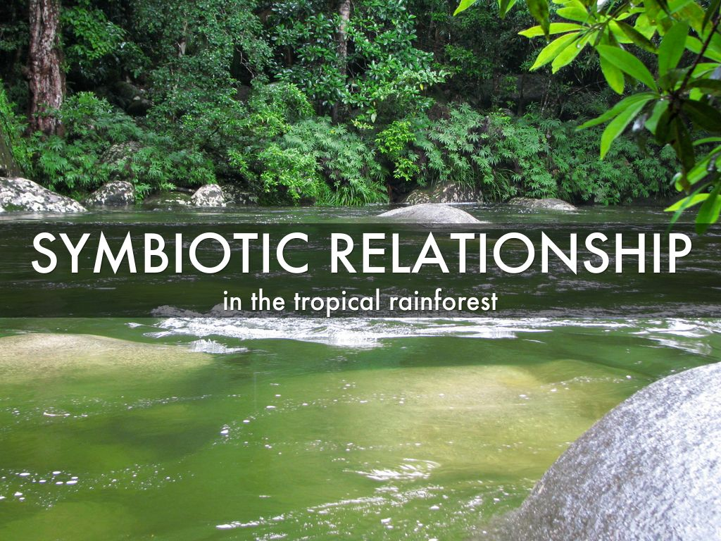 symbiotic relationship examples in the tropical rainforest