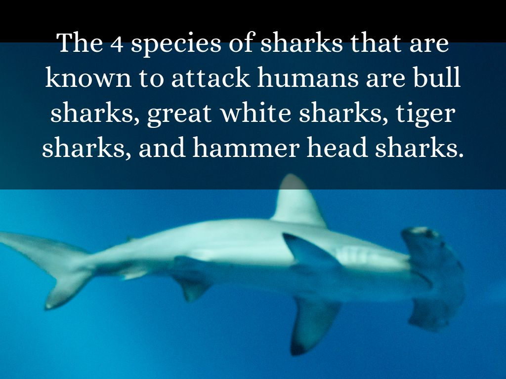 shark attack of 1916 I survived the shark attacks of 1916 by lauren tarshis scholastic inc | isbn 9780545414876 ebook 112 pages | ages 9 to 12 it's the summer of 1916, and ten-year-old chet roscow is just as captivated as everyone else along the jersey shore by the local news: a great white shark has been attacking and killing people.