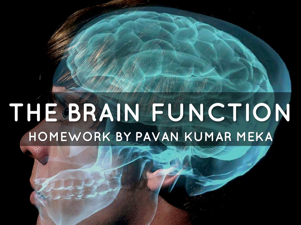 The Brain Function