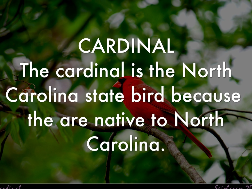 the cardinal is the north carolina state bird because the are native to north carolina