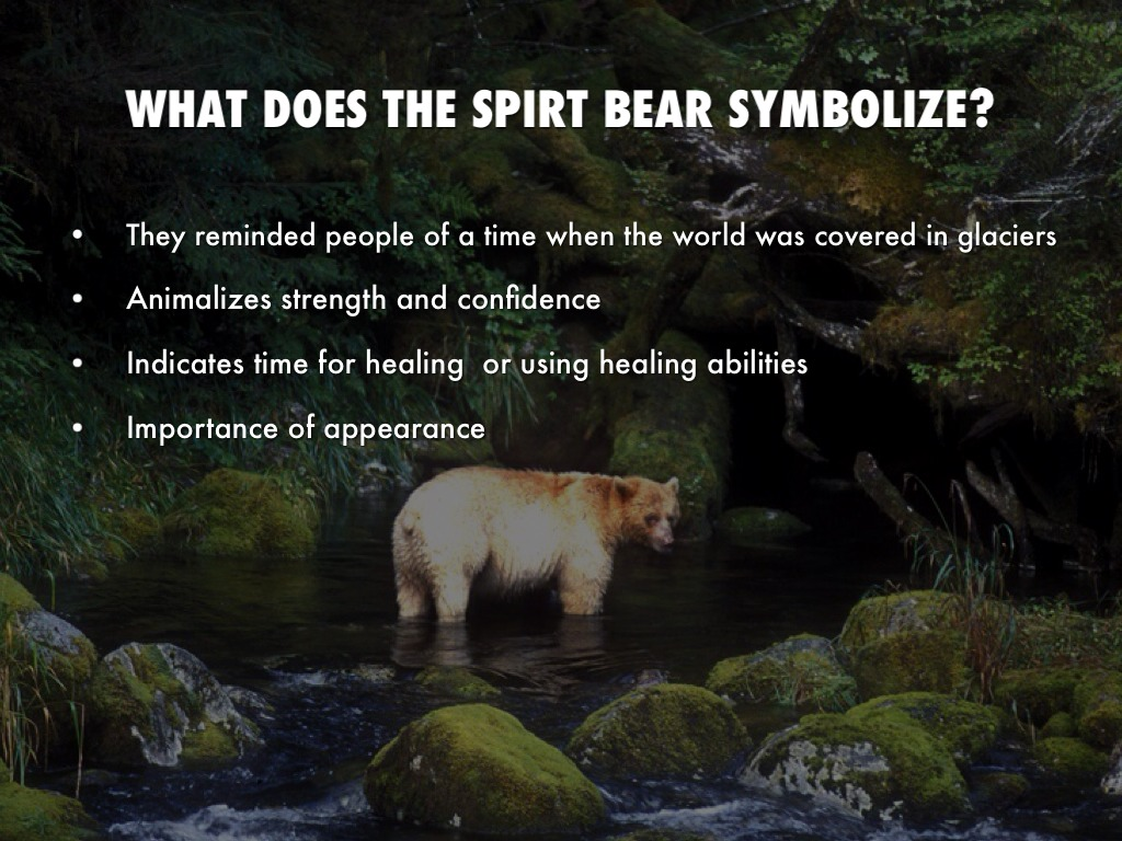 Spirit bear by blivaditis what does the spirt bear symbolize biocorpaavc Choice Image