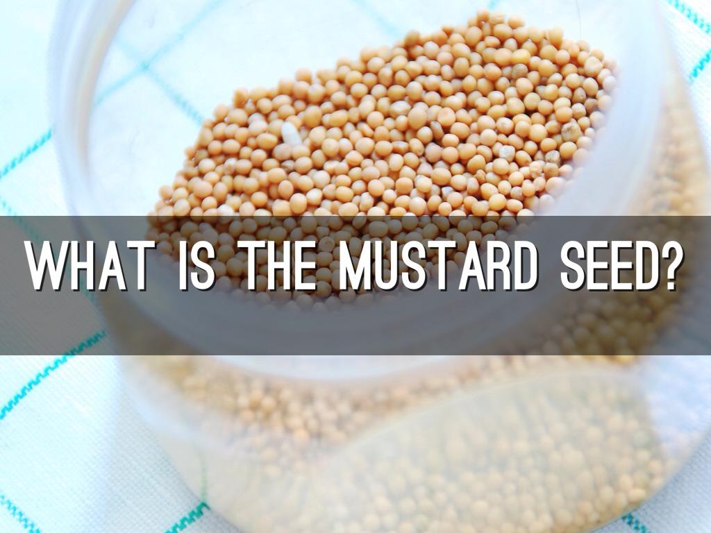 the mustard seed Mustard seed preschool 1215 hillsboro rd, franklin, tn 37069 office hours: 8: 30 am – 3:30 pm / mon – fri school hours: 9:15 am – 1:15 pm / tues – fri.