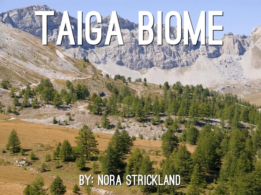 Terrestrial Ecosystem by Nora Strickland