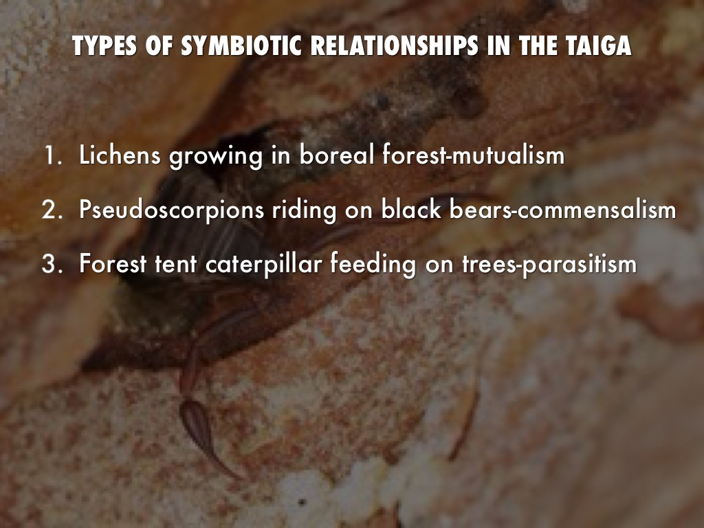 symbiotic relationship in the taiga