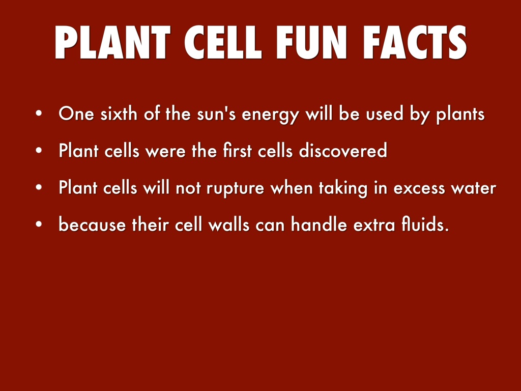 Important facts about a plant