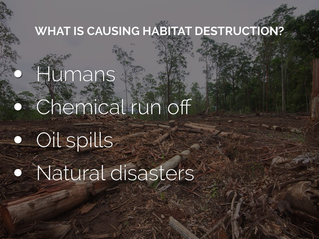 the impact of humans on the destruction of nature and its resources There is no doubt that human civilization has had a negative impact on biodiversity, particularly since the industrial revolution overfishing and hunting, the destruction of habitats through agriculture and urban sprawl, the use of pesticides and herbicides, and the release of other toxic compounds.