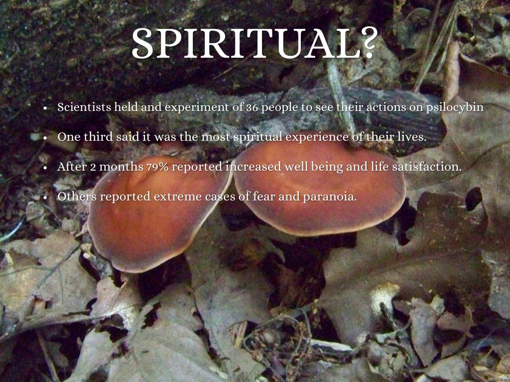 Psilocybin Mushrooms By Tyler Durham