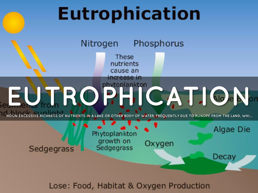 phosphorous and eutrophication