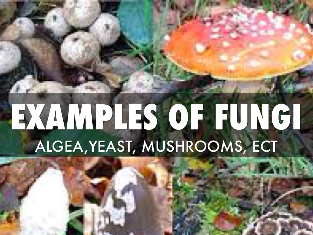 Fungi By Donnie Nelson