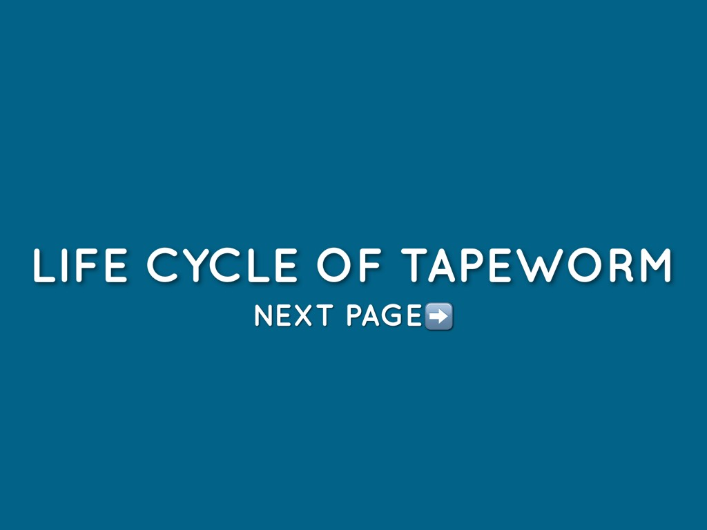 life cycle of a tapeworm