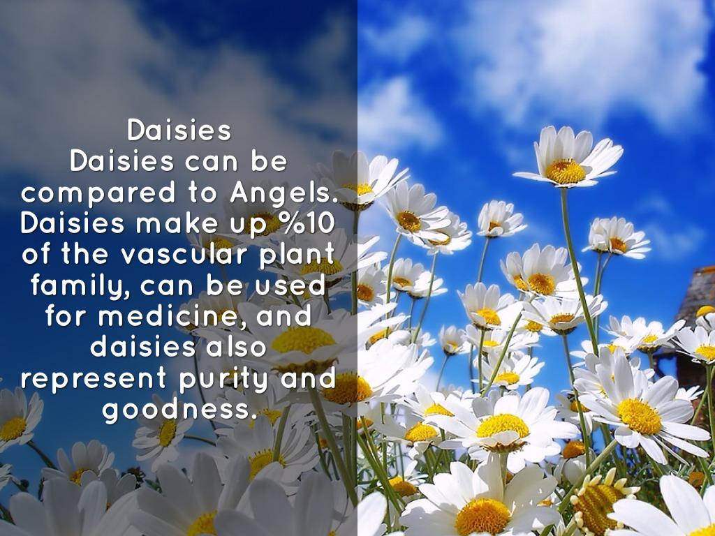 Sims Poem Daisy By Briana Pruitt