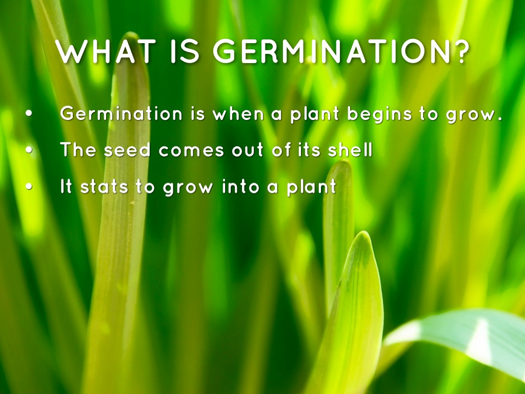 Germination By James Pifer