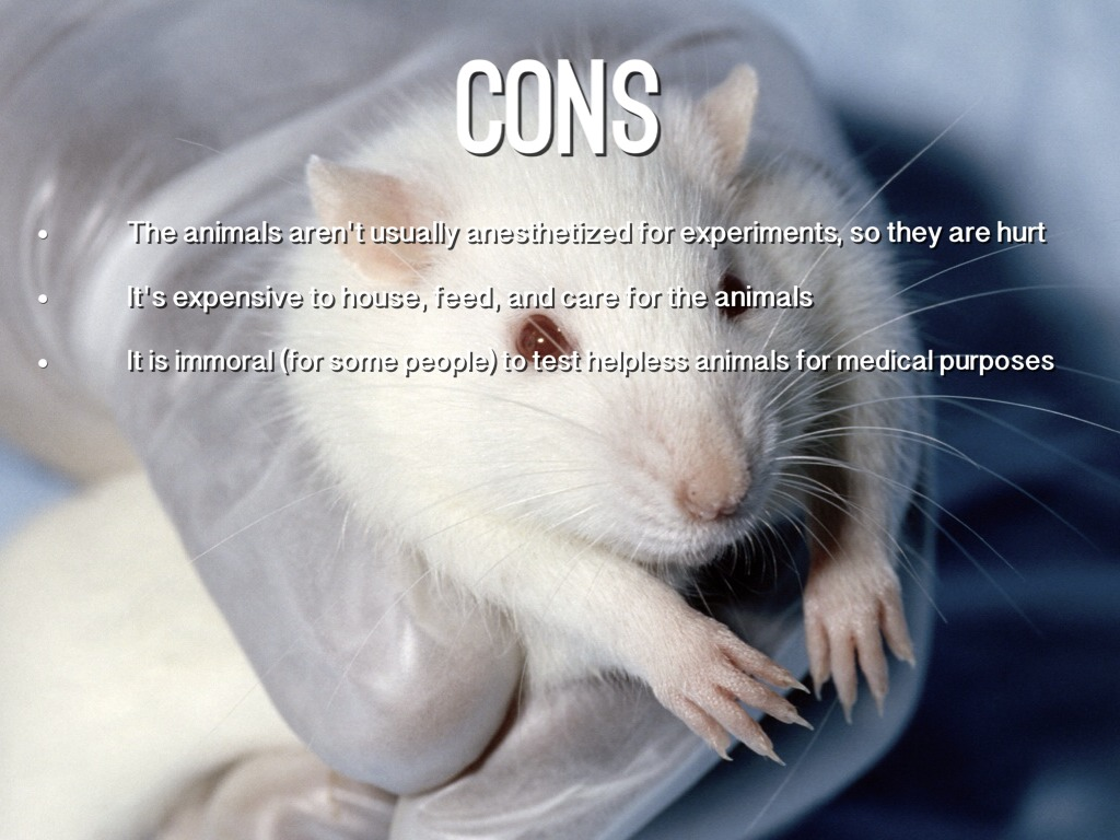 pros and cons animal testing essay