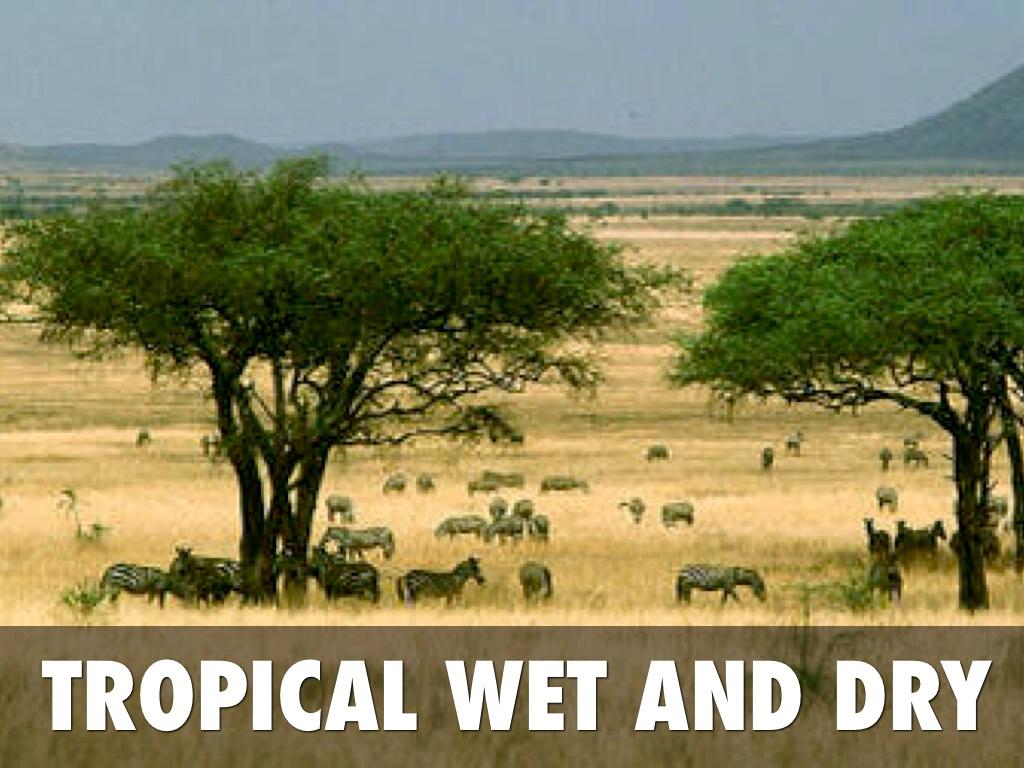 Clima tropicale bagnato e secco - Immagini Bing-7265