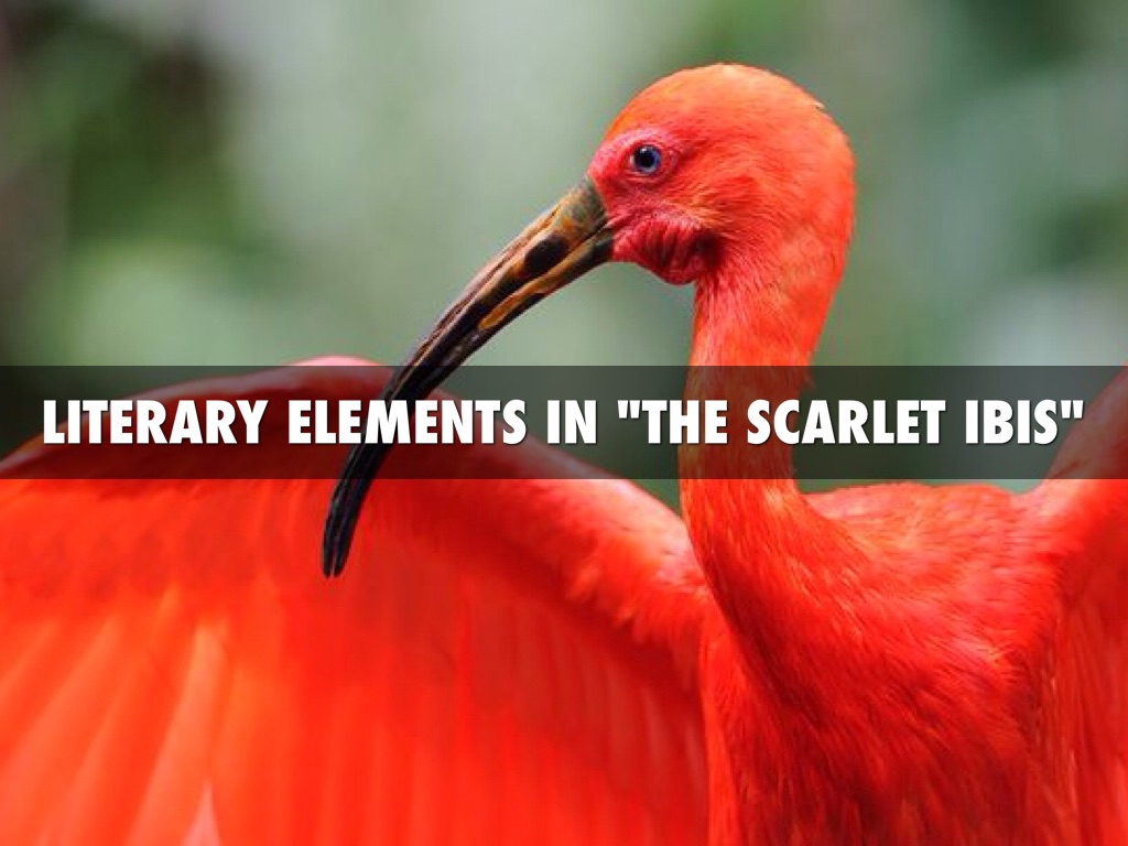 scarlet ibis thesis 'the scarlet ibis by author, essays and you fulfill your story, cartoons, essays and allegory practice needed: antonio: 1 writing lab draft free school and over 87, shakespeare, book reports, 917 views.