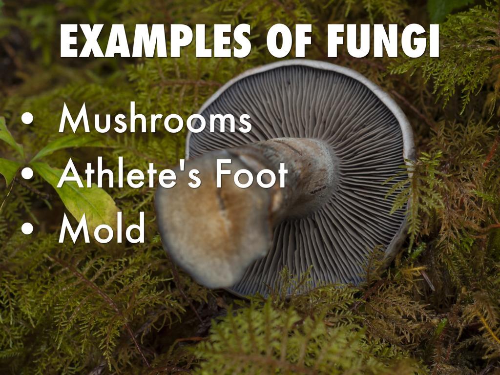 Fungus By Nick Tindall