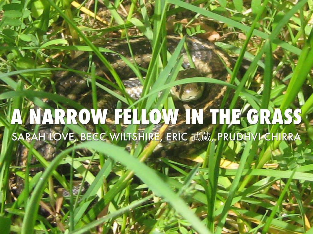 narrow fellow A discussion of important themes running throughout a narrow fellow in the grass great supplemental information for school essays and projects.