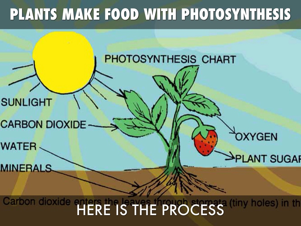 photsynthesis for kids Learn more about kids discover online start overview our goal is to inspire kids, feed their natural curiosity, and instill a love of reading and learning in an environment filled with fun.