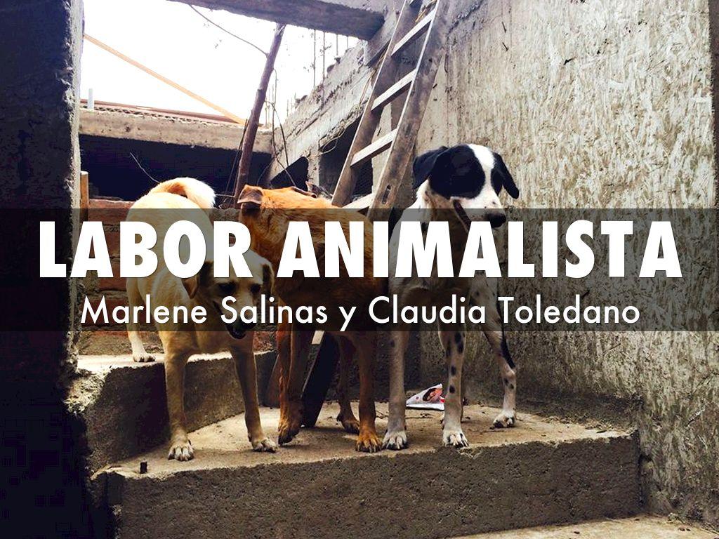 labor animalista