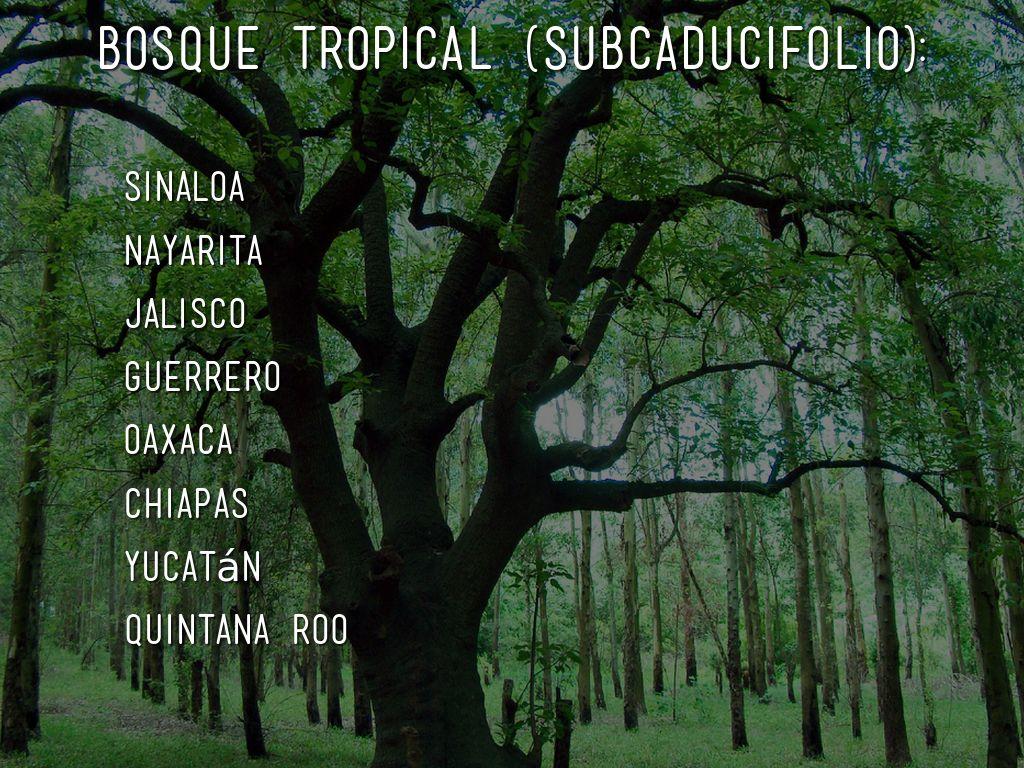 Bosque Tropical By Fatima Diego