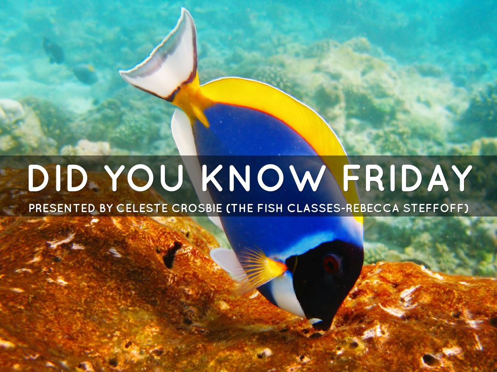 Did You Know Friday