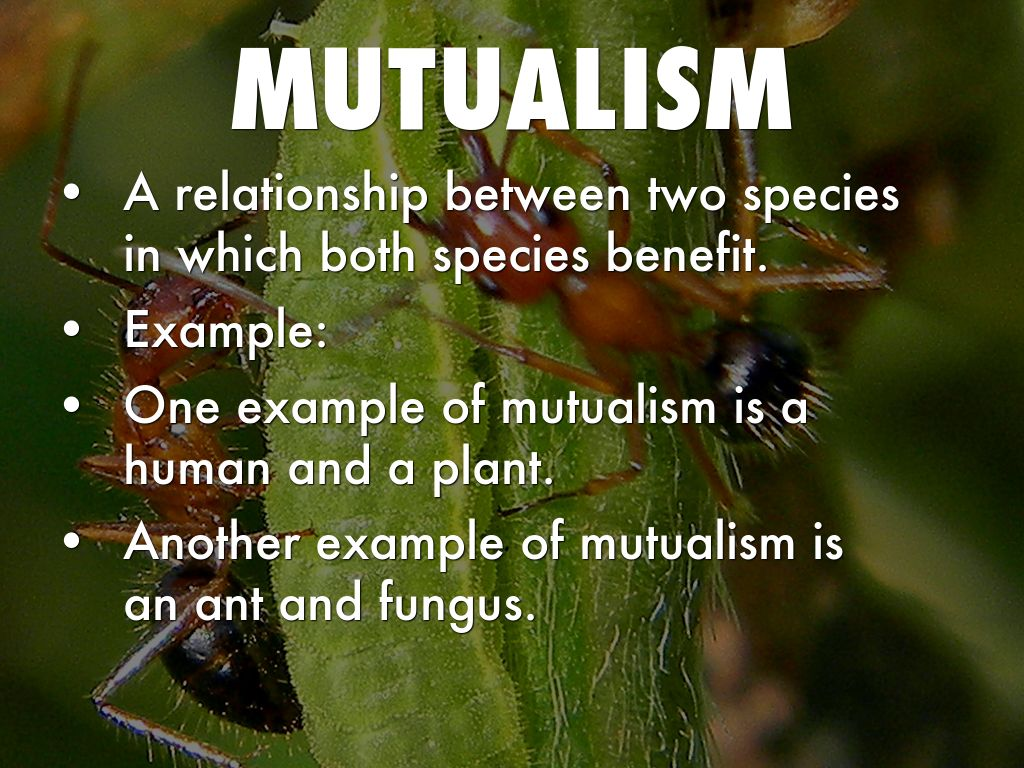 mutualistic relationship in a swamp