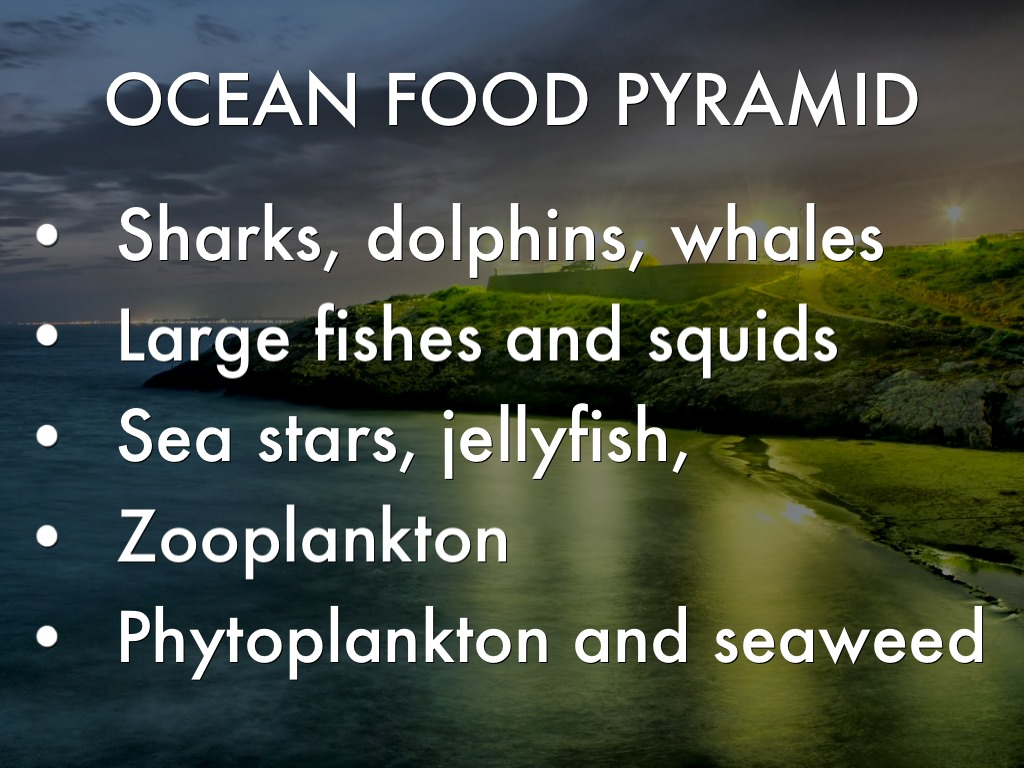 ocean food pyramid - HD 1024×768