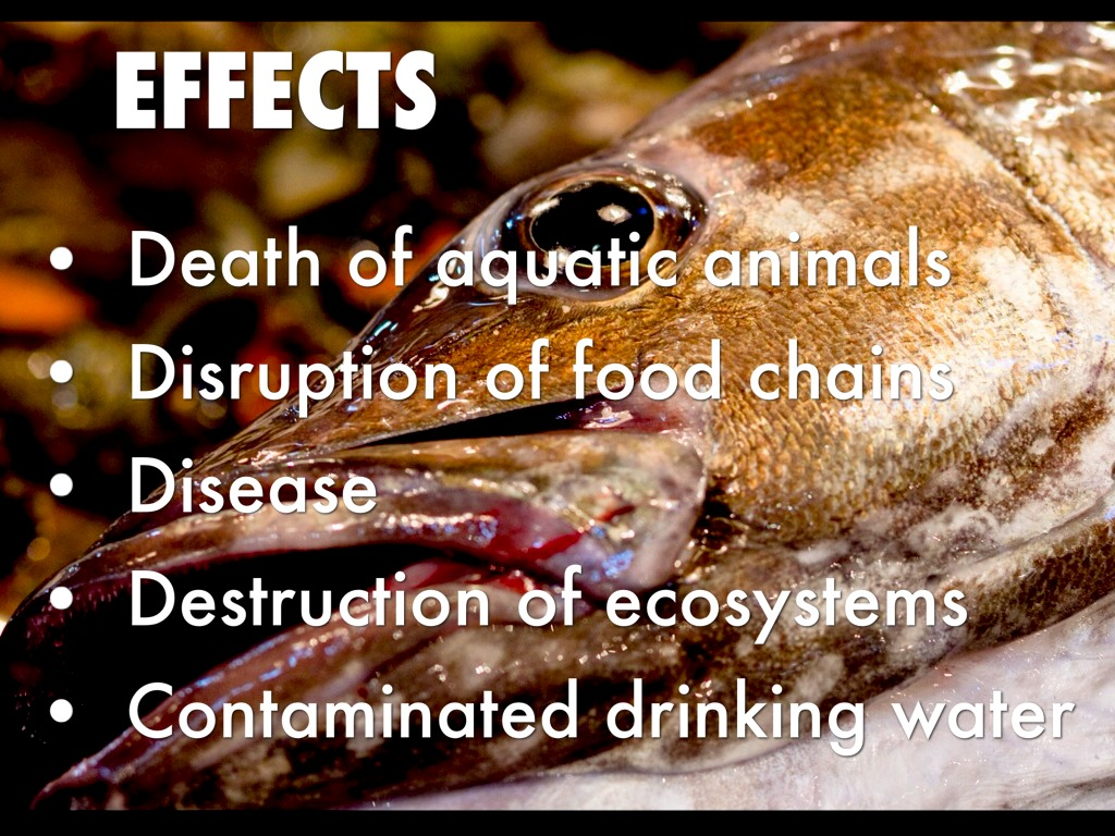 effects of water pollution Additional effects of water pollution include: ÿ the food chain is damaged when toxins are in the water, the toxins travel from the water the animals drink to humans when the animals' meat is eaten.