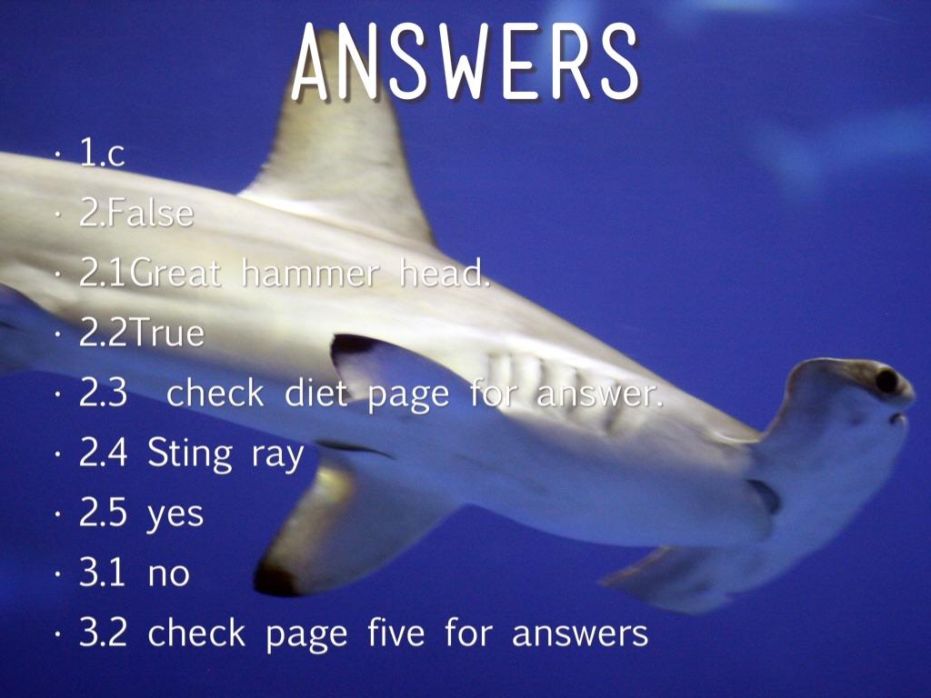 Hammerhead Shark Facts & Information