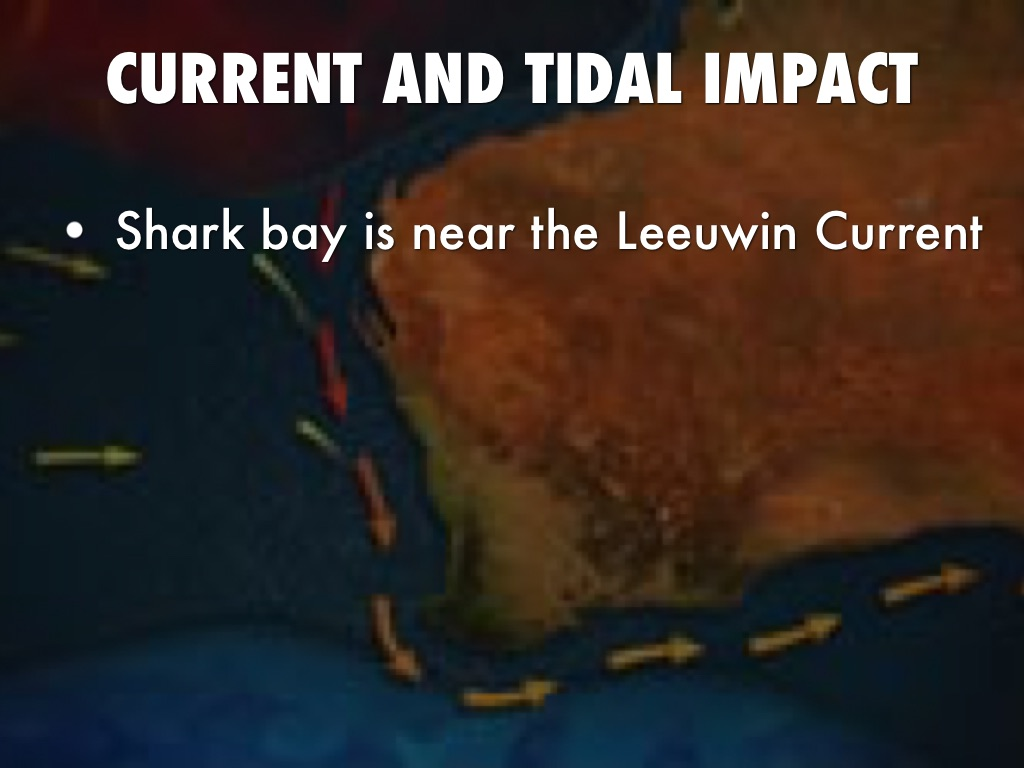 the leeuwin current
