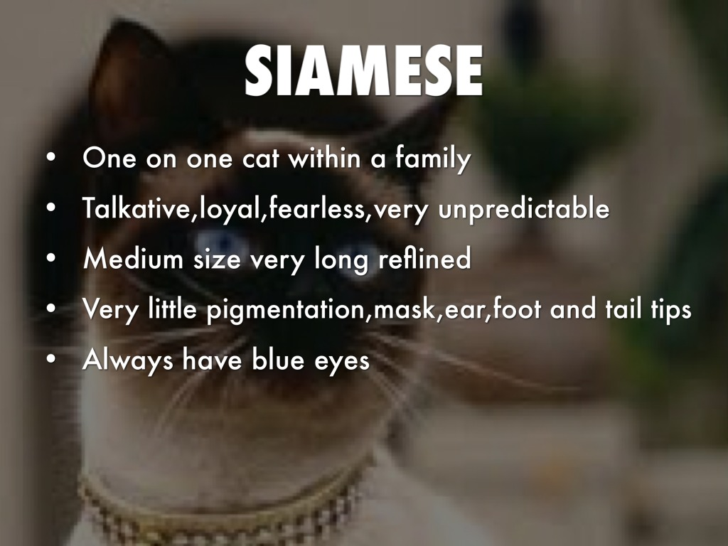 Cat Breeds by 16beamkai