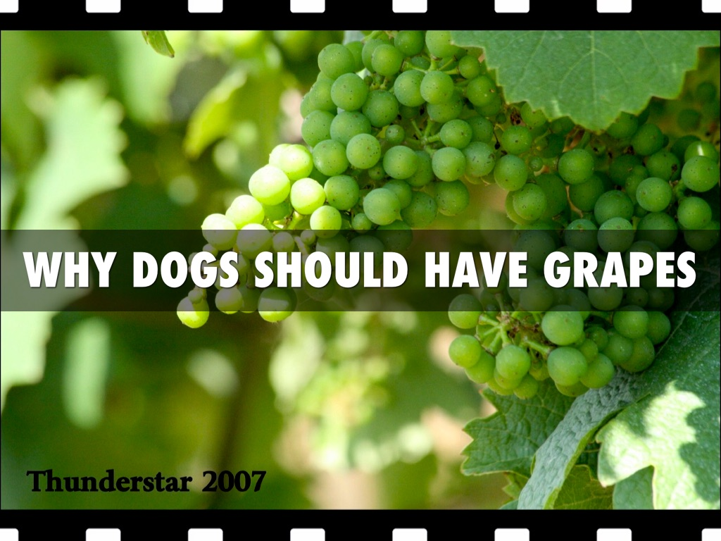 Dogs Should Have Grapes