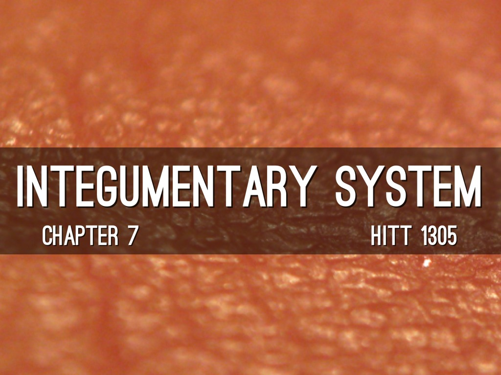 HITT 1305: Chapter 7- The Integumentary System by