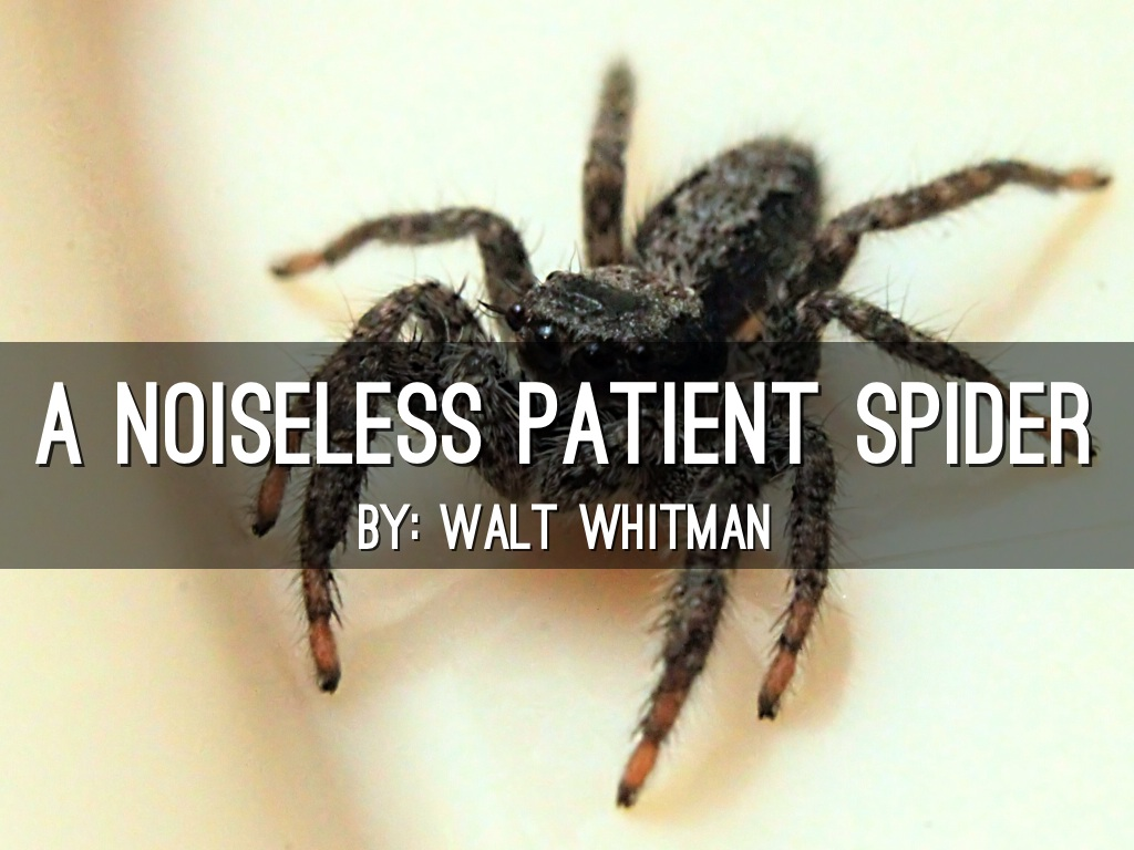 a noiseless patient spider essay Brief summary of the poem a noiseless patient spider walt whitman describes a spider beginning to work on its web it's doing the trickiest, most uncertain part of the job: trying to lay down the first line.
