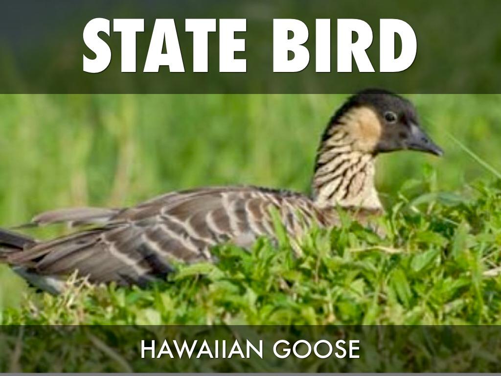 Hawaii State Animal Name