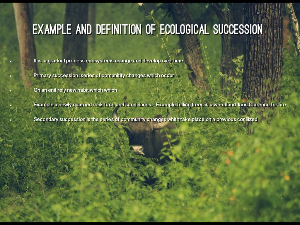 temperate deciduous forest by ameri clark