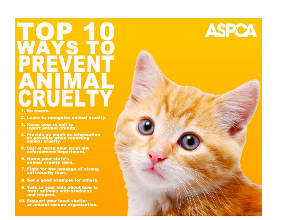 animal abuse a cruelty to animals