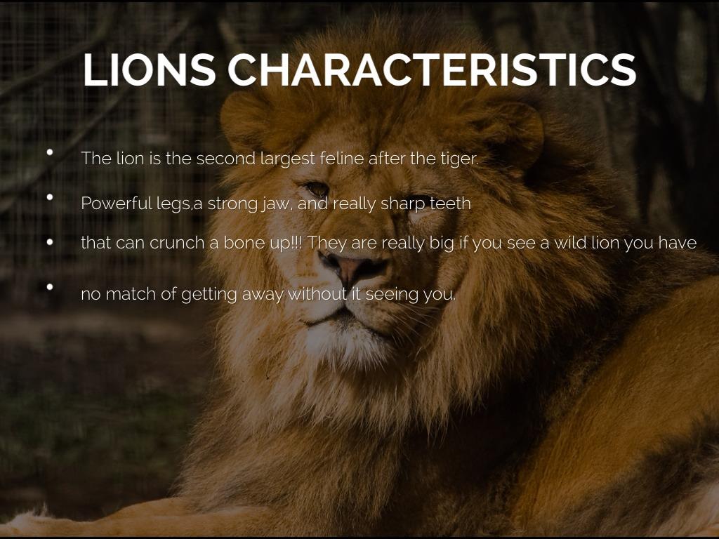 The Lions (18) - Live Love Laugh