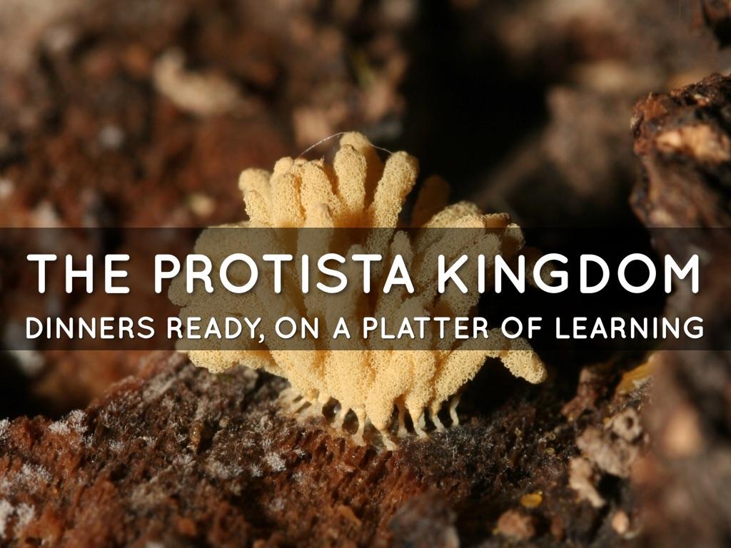 Protista And Fungi Kingdoms