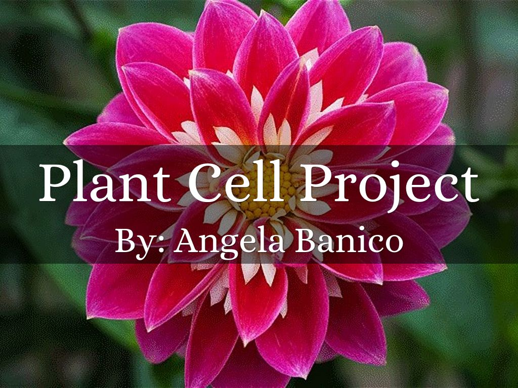 Plant cell project by angela banico plant cell project ccuart Choice Image