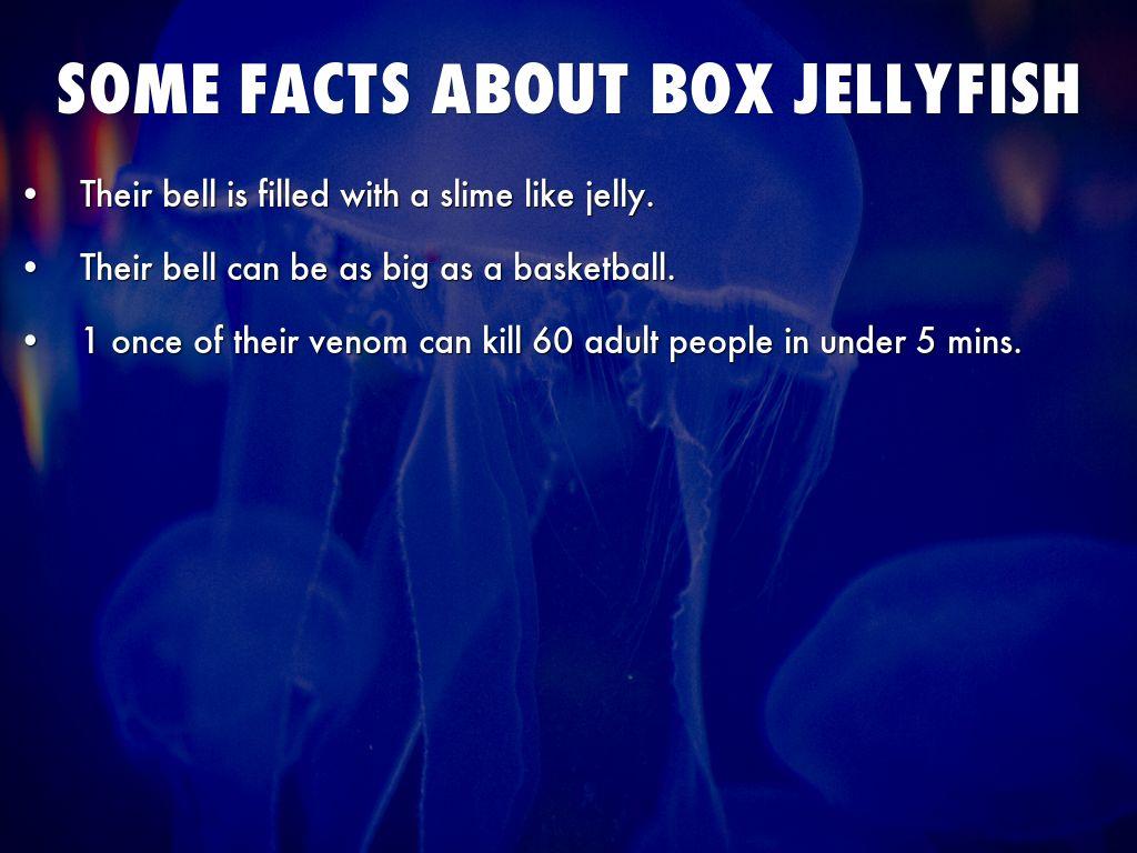 box jellyfish by elley 5thgrade