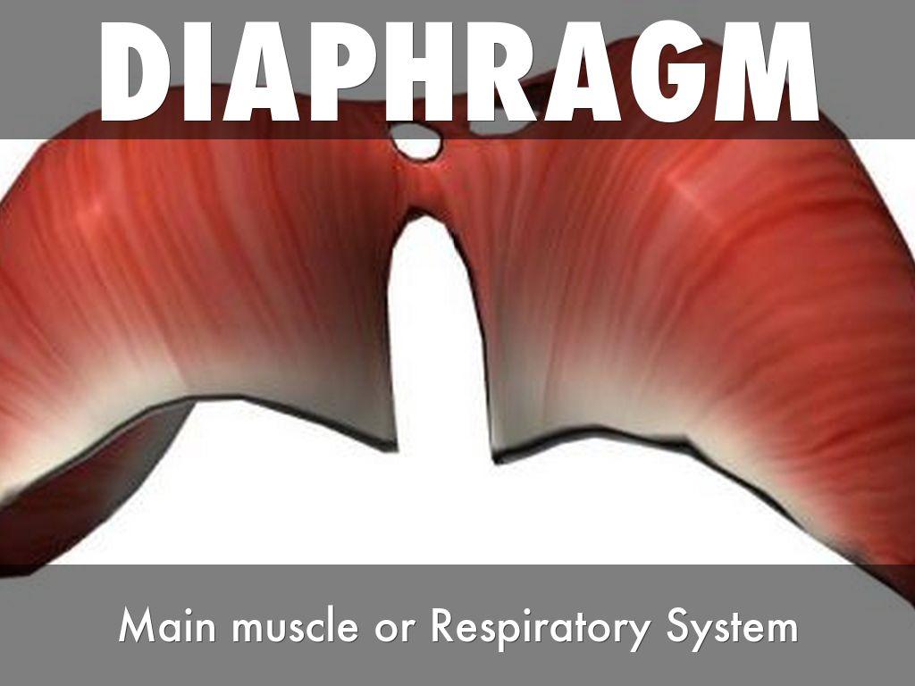 Respiratory System By Andrewjwittwer
