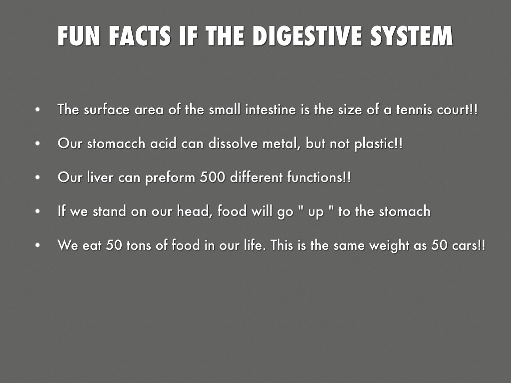 Digestive System Elementary
