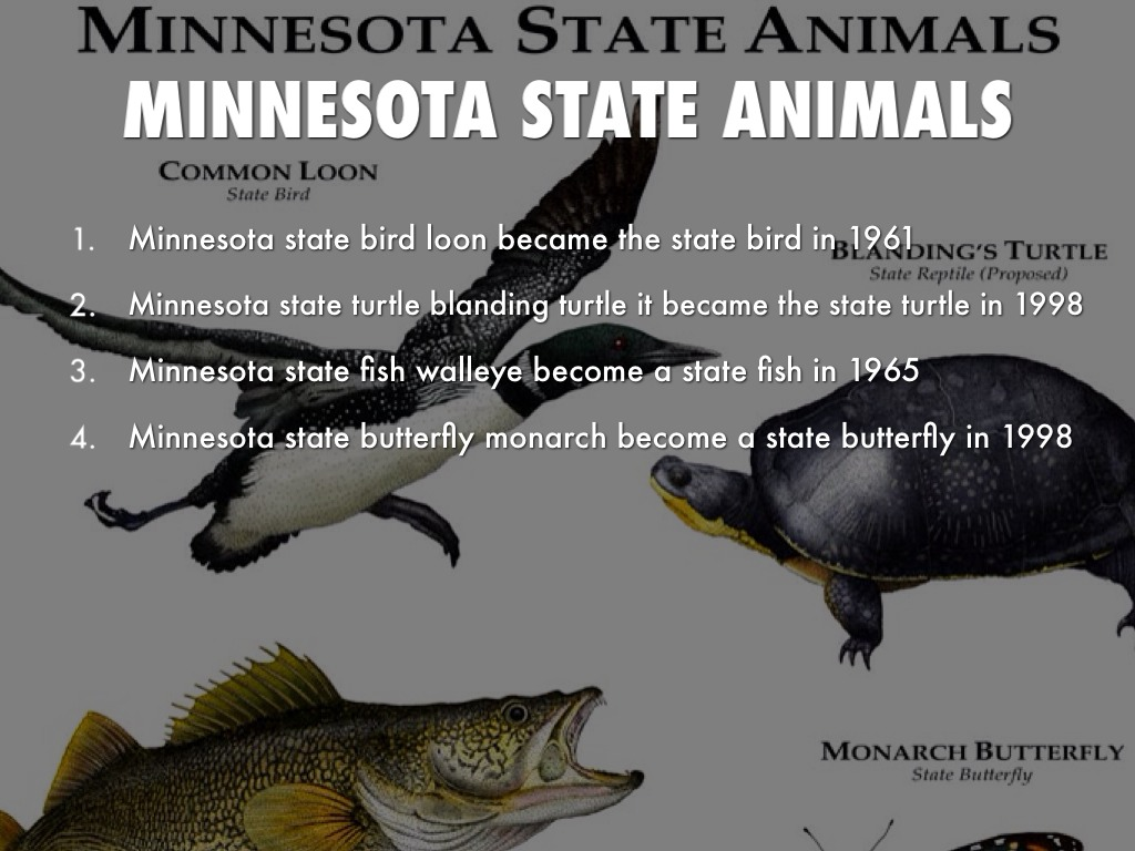 minnesota state syllables by aaron munoz