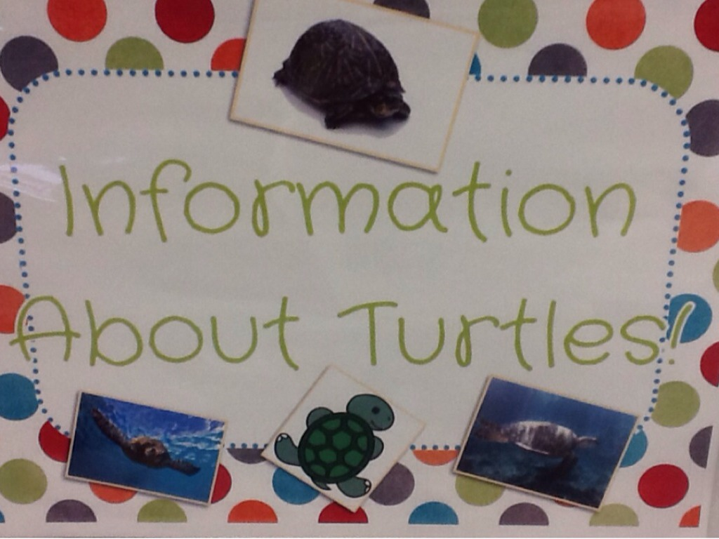 All About Turtles: Comparing/Contrasting Texts